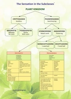 Plant Chart - Rajan Sankaran